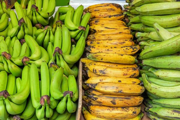 Types of bananas - Plantain or banana