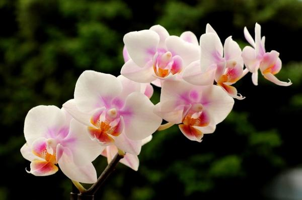 How to care for orchids - Light and location for orchids