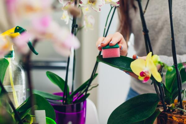 How to clean plant leaves - Why you need to clean plant leaves