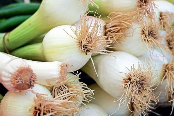 Types of onion - Chives