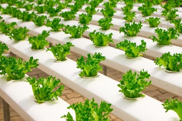 Hydroponic Plants: Types, List of Examples and How to Grow Them - How to Make a Homemade Hydroponic Grow
