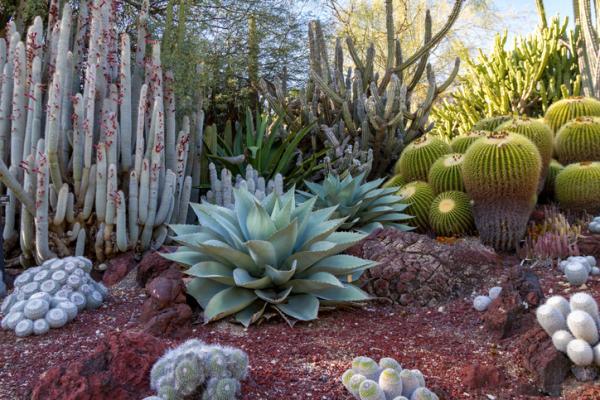 11 types of gardens - Rainfed garden