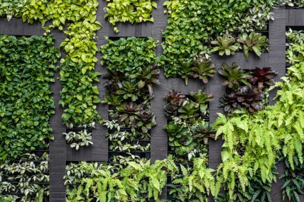 11 types of gardens - Vertical garden