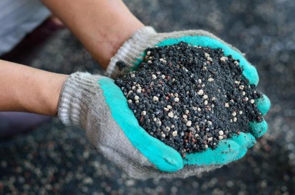 Japanese maple: care and varieties - Acer palmatum fertilizer