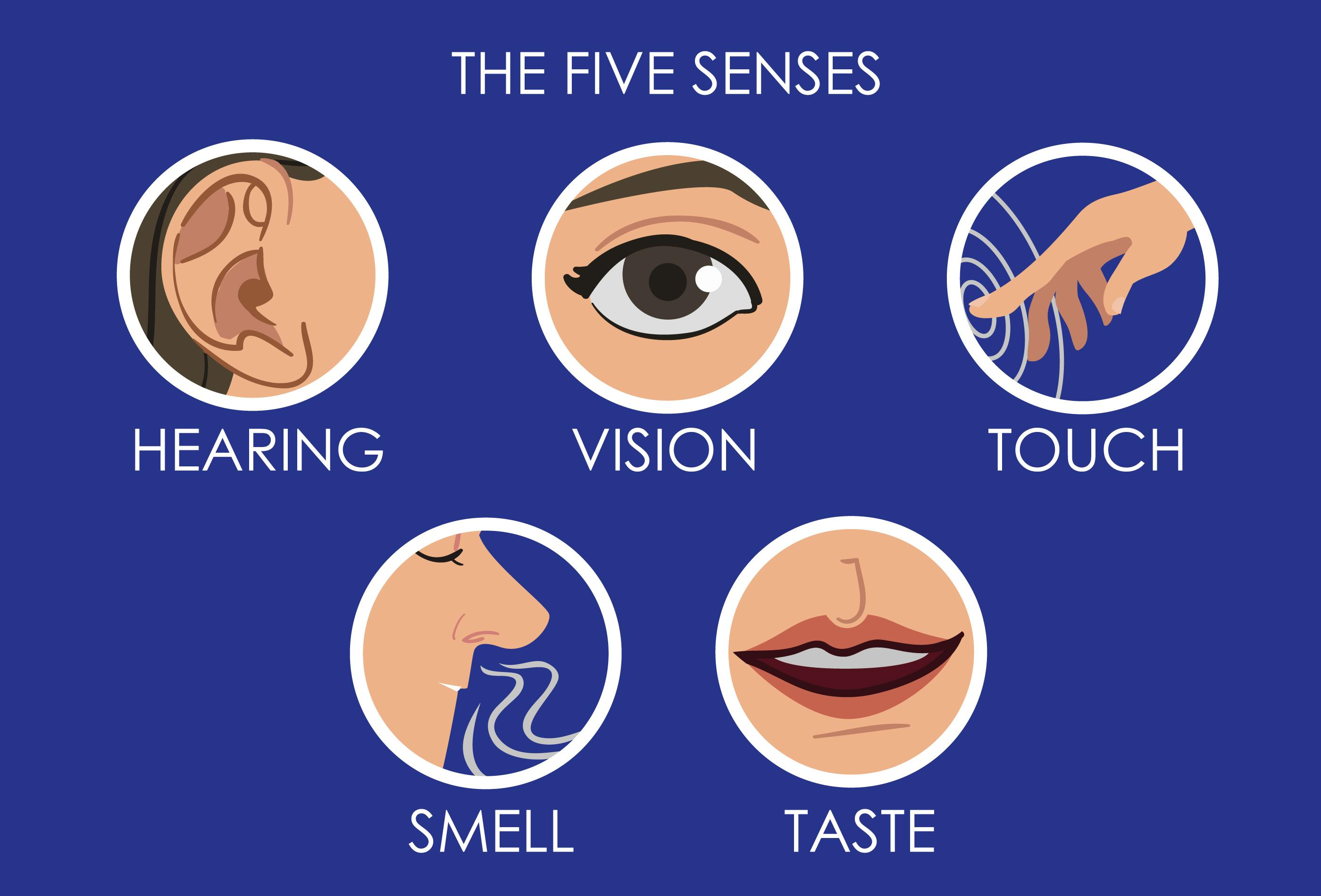 What Are The Five Senses And What Do They Do