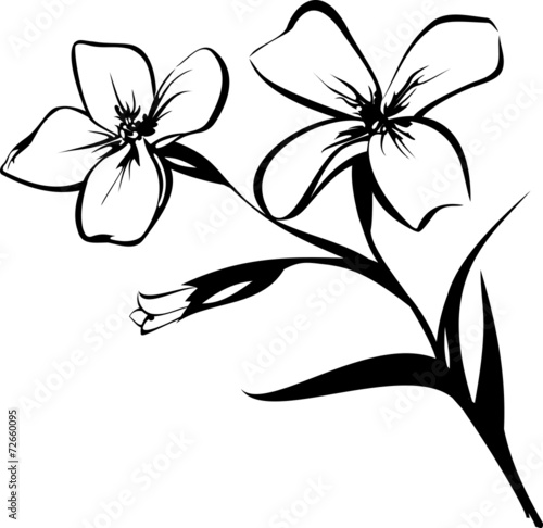 Картинки Цветы Чёрно Белые