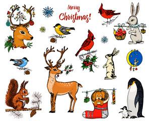 Search Photos Christmas Owl