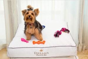 5 hoteles dogfriendly para viajar por México con tu mejor amigo