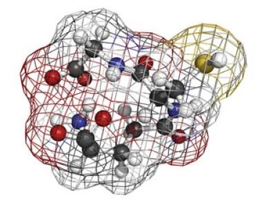 Glutathione antioxidant, molecular model