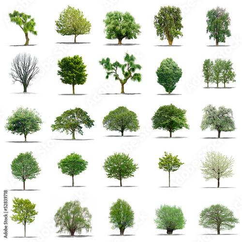 lot d arbres sans feuilles sur fond blanc en haute definition wall mural