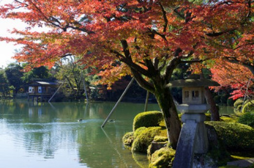 Autumn foliage at Kenrokuen Garden in Kanazawa, Japan