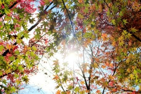 紅葉と木漏れ日