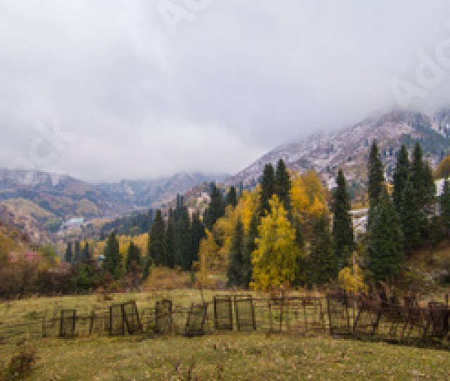 Deciduous Forest In The Autumn In The Mountains Kazakhstan Almaty Medeo