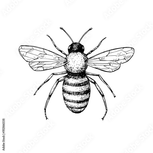 quotHoney bee vintage vector drawing Hand drawn isolated