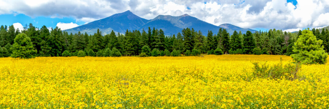 David has been the host for san. 420 Best San Francisco Peaks Images Stock Photos Vectors Adobe Stock
