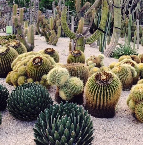 montjuic cactus park (9)