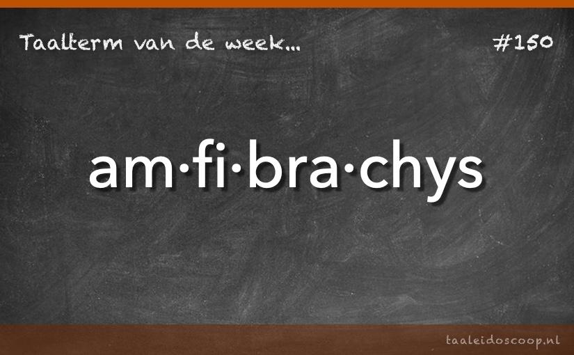 TVDW: Amfibrachys