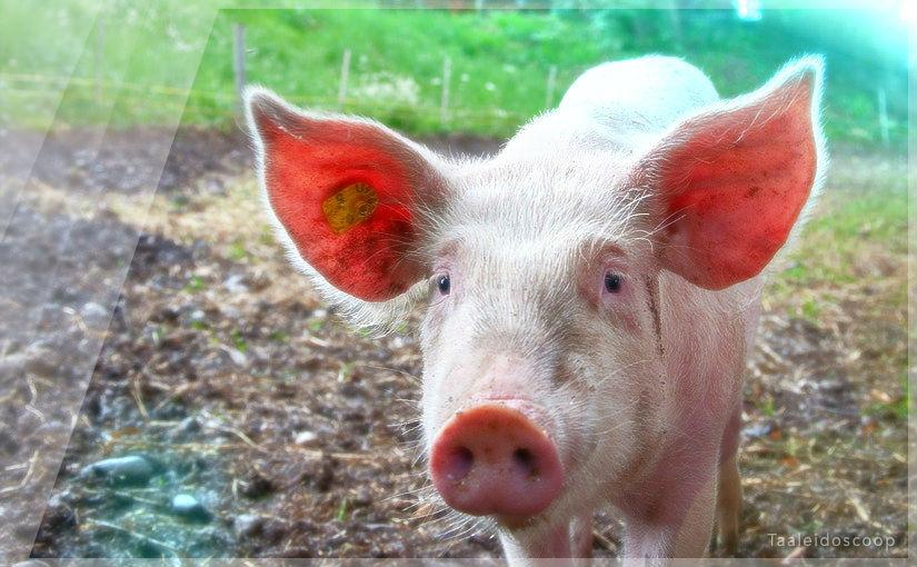 Diagram Prize 2017: Forenzende varkenshouders