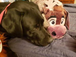 pillow pets tabbys pantry
