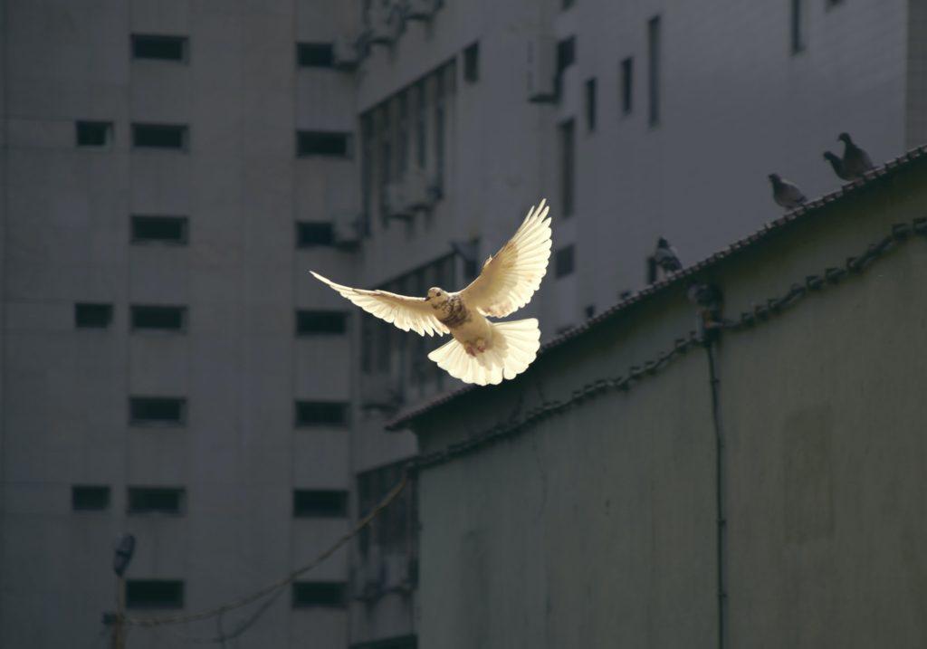#BarışÇünkü