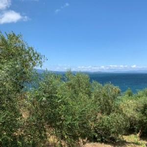 大村湾を望むオリーブ園