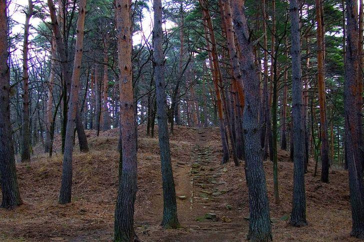 松本の里山辺にある林城跡