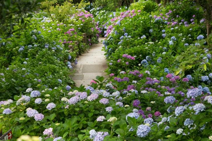 下田公園では6月に『あじさい祭』が開催される