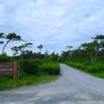 伊良湖開拓地海岸防災林