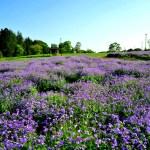千葉県立北総花の丘公園
