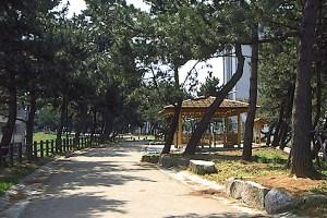 曲里の松並木