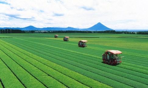 菊永地区知覧茶生産団地