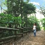 真鶴森林浴遊歩道