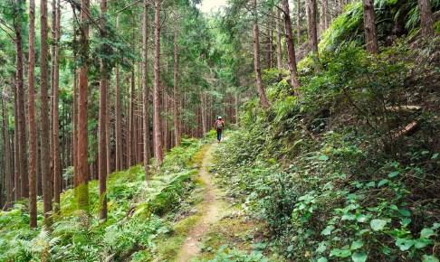 熊野古道伊勢路 二木島峠道・逢神坂峠道