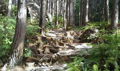 熊野古道伊勢路 ツヅラト峠道