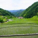 大井谷の棚田