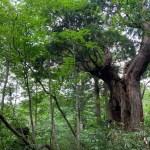 美女平探鳥・森林浴コース(美女平遊歩道)