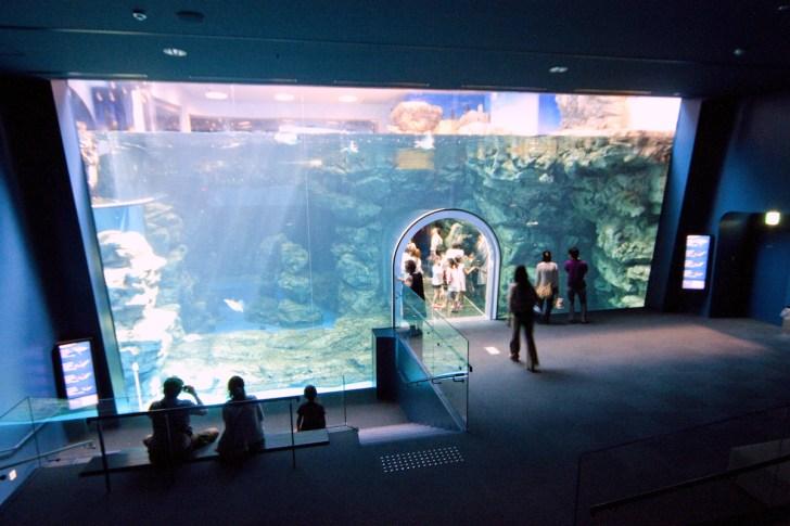 下関市立しものせき水族館「海響館」