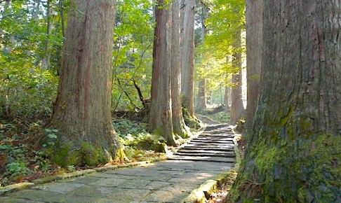 羽黒山・表参道杉並木