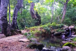 月山山麓湧水群・ブナの泉