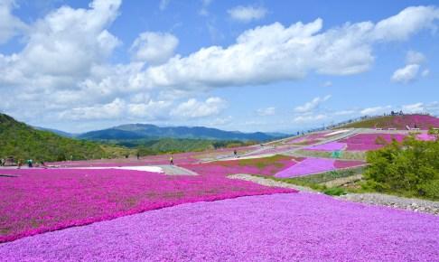 茶臼山高原天空の花回廊『芝桜まつり』