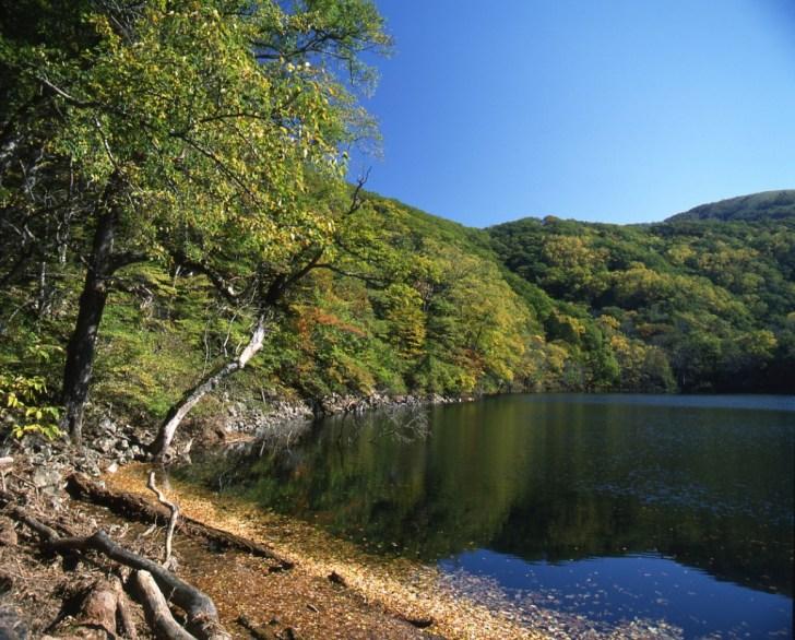 紅葉の豊似湖。ヒグマには要注意です