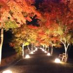 もみじ祭り~心静かに紅葉を観る会~