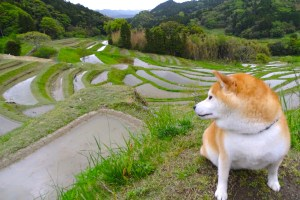 柴犬岳と房総半島横断・大山千枚田