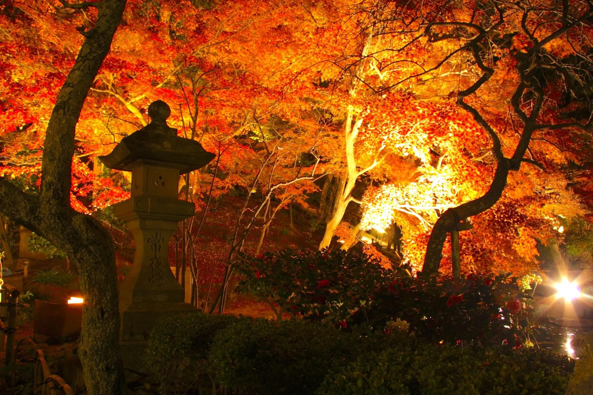 長谷寺『夜間特別拝観・紅葉ライトアップ』