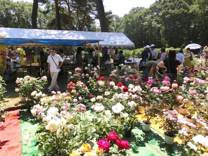 井頭公園『ローズフェスタ』