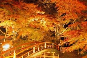 伊香保温泉『紅葉ライトアップ』