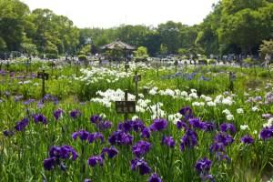 城北菖蒲園