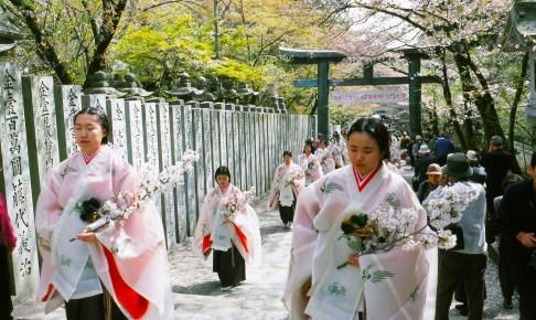 金刀比羅宮『桜花祭』