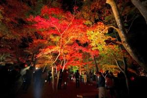 月の石もみじ公園『紅葉ライトアップ』(長瀞紅葉まつり)