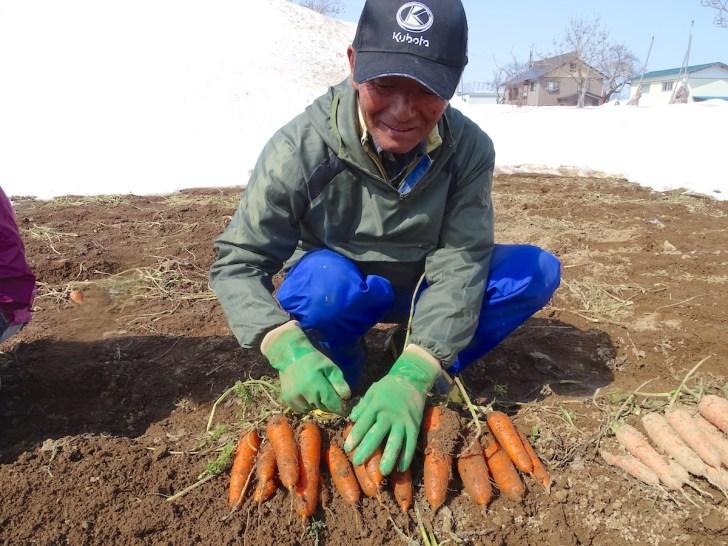 雪下人参の収穫体験